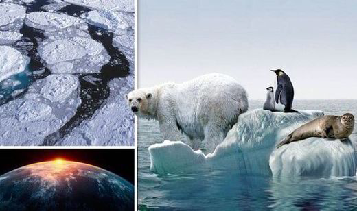 bear, ice, earth