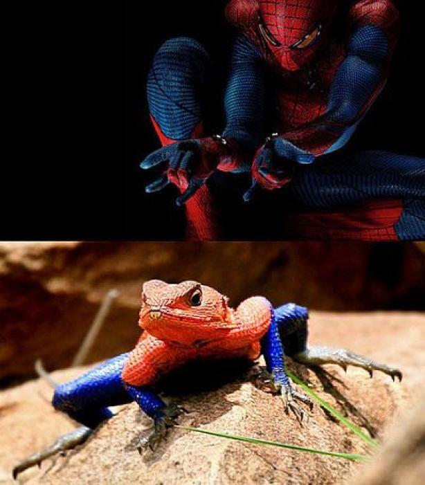 ici vous y déposerez toute vos blagues Spiderman_lizard