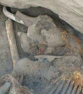 L'actualité archéologique de la semaine, 1 octobre - 7 octobre 2012 Le_mammouth_a_ete_decouvert_da