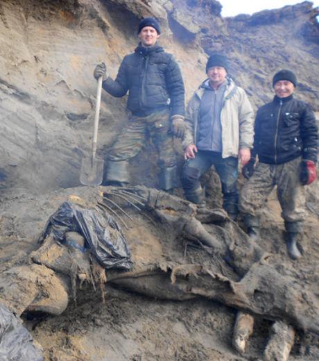L'actualité archéologique de la semaine, 1 octobre - 7 octobre 2012 Le_specimen_decouvert_est_dans