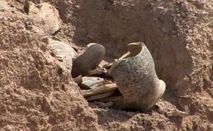 Babylonian temple discovered in Irak