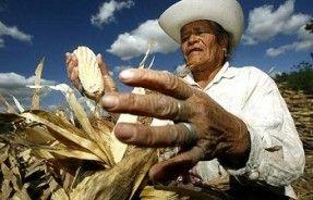 Mexico OGM