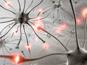 neurones synapses