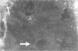 Image satellite du cratère découvert par le Dr. Sharad Master