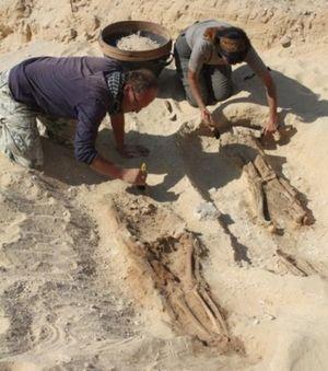 http://fr.sott.net/image/image/s6/135645/medium/les_squelettes_retrouves_sur_l.jpg
