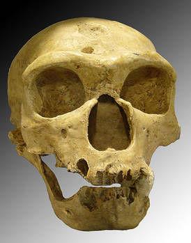 Crane Néandertal espagnol