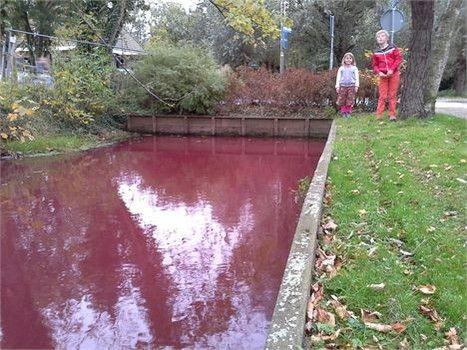 Un canal devient rouge sang à Nootdorp dans le sud des Pays-Bas