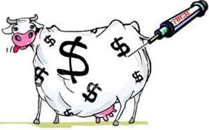 Caricature vache aux hormones