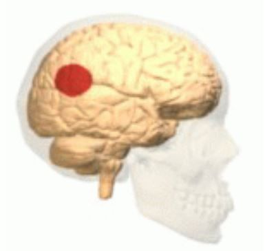 Le carrefour temporo-pariétal est une région du cerveau située à la jonction des lobes temporal et pariétal.