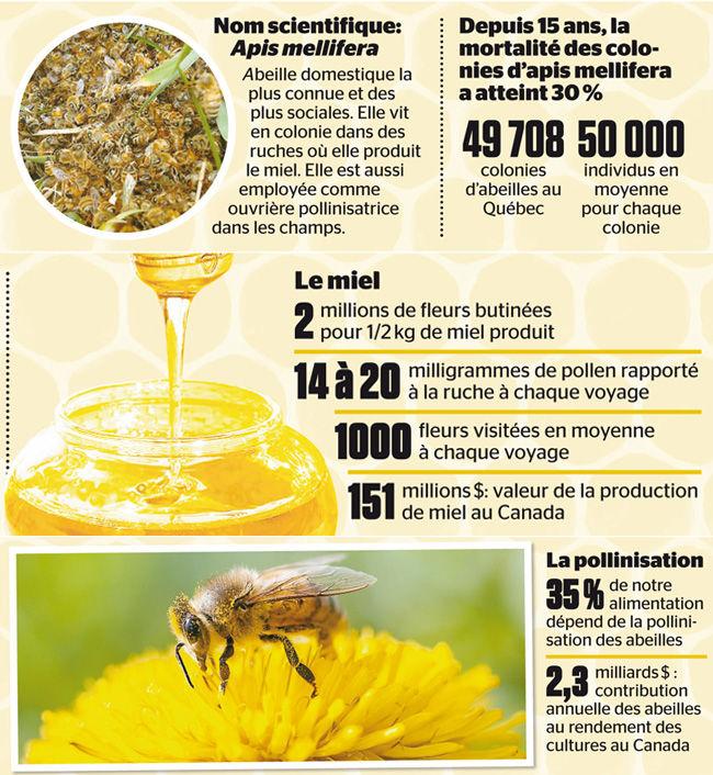 les flaques d 39 eau toxiques seraient la cause de la disparition des abeilles selon un chercheur. Black Bedroom Furniture Sets. Home Design Ideas