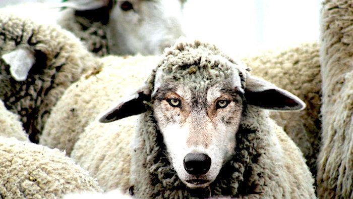 Cachés à la vue de tous, les psychopathes dirigent-ils le monde ?  WolfSheep