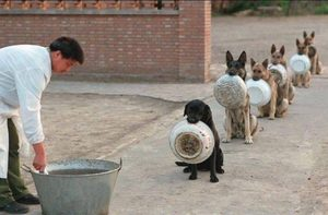 Police trained dogs, China