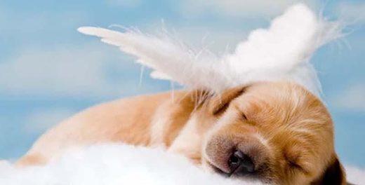 Est-ce que les chiens vont au ciel ? (Père Guy Simard) - À lire ! ChncdhaHR0cHM6Ly9wZXJmZWN0by5n