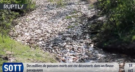 Poisson morts au Paraguyay, octobre 2017