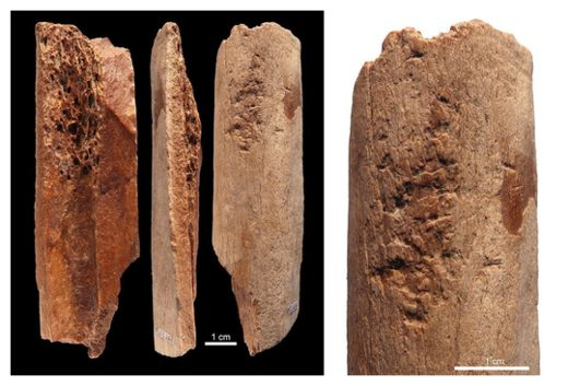 Ancient Bone Tools