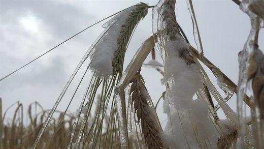 snow, crops