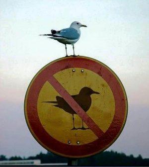 Panneaux drôles Birdsign