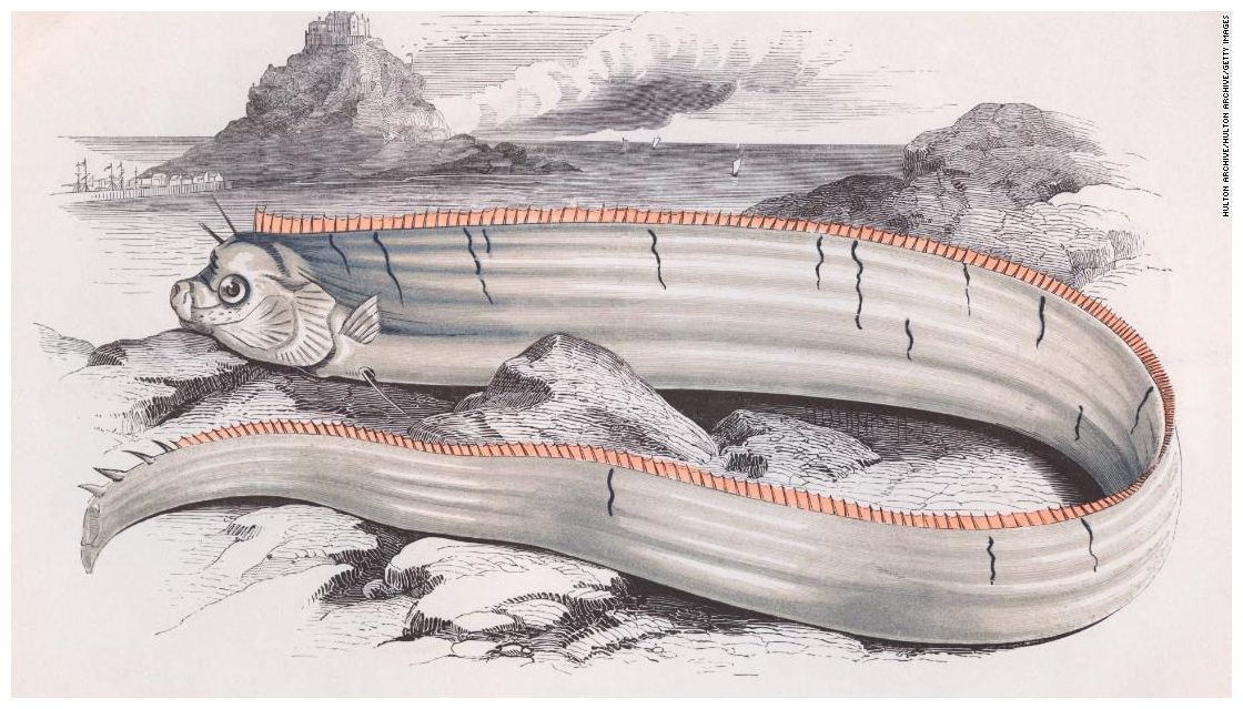 poissons datant d'un homme vierge