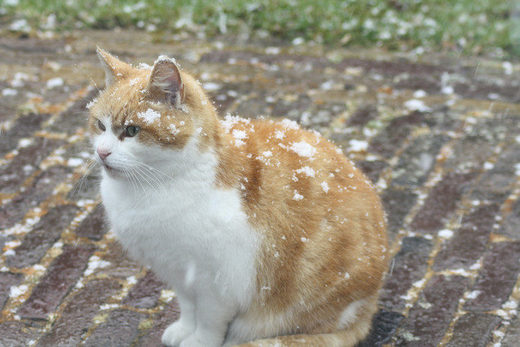 Peter Rotteveel from the Dutch village Stiens took this picture of snow falling on his cat.