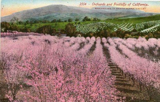 News au 11 juillet 2020 Orchards_Foothills_Springtime