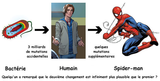 Evolution bactérie Spider-Man