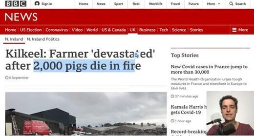 Irlande, porcherie, feu