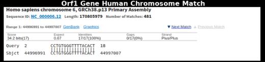 Orf1 Gene Human Chromosome Match