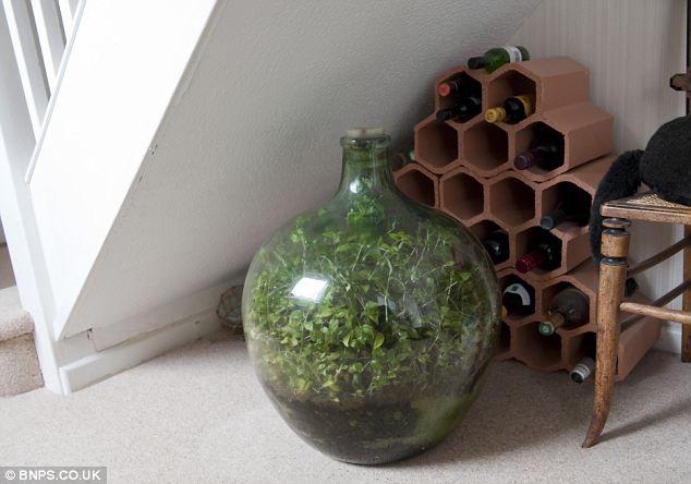 enferm e dans une bouteille depuis 53 ans sans arrosage une plante a reconstitu un micro. Black Bedroom Furniture Sets. Home Design Ideas