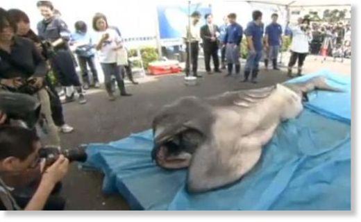 megamouth_shark.jpg